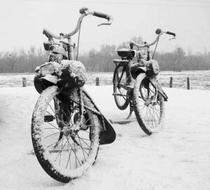 Solex winterarrangement